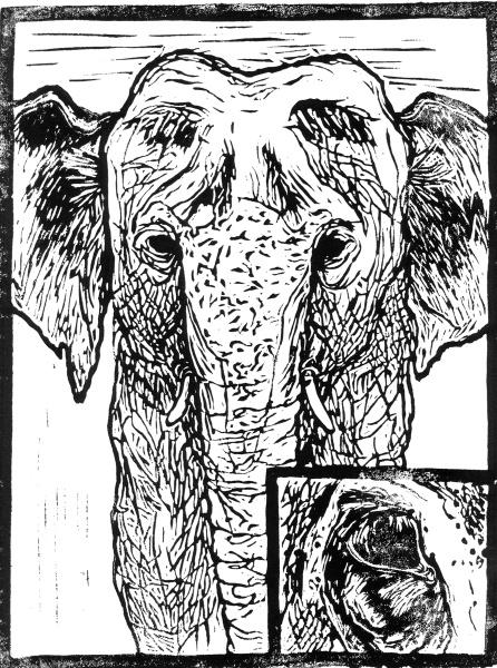malvinadelesalle_elephant